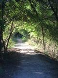 Тоннель деревьев Стоковые Изображения
