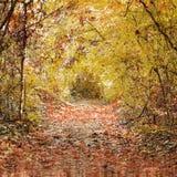 Тоннель листьев осени Стоковые Изображения