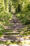 Тоннель рельса в лесе Стоковая Фотография RF
