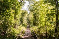 Тоннель рельса дерева в лесе Стоковое фото RF