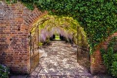 Тоннель цветка глицинии, замок Хэмптона Корта, Herefordshire, Англия стоковые изображения rf