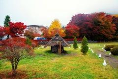 Тоннель Momiji на падении, Kawaguchiko Стоковая Фотография RF