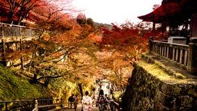 Тон нижнего света с задней стороной предназначенной для подростков девушки с японским clothki Стоковая Фотография RF