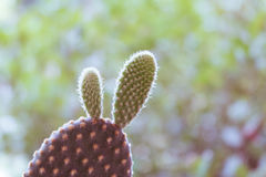 Тон предпосылки зеленого цвета кактуса крупного плана Стоковое Фото