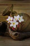 Тон цвета натюрморта розового пука plumeria цветка с старым ба Стоковая Фотография