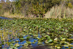 топь болотистых низменностей Стоковые Изображения