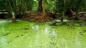 топь джунглей стоковая фотография