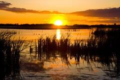 топь захода солнца Стоковое Фото