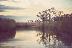 топь Луизианы стоковое фото rf