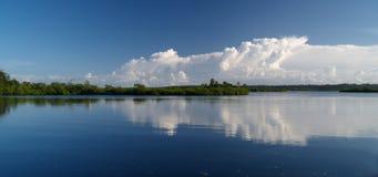 топь мангровы Стоковая Фотография