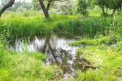 Топь с зелеными тростниками в воде Стоковые Изображения