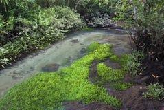 Топь с рекой стоковое изображение rf