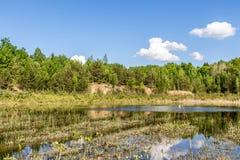 Топь с сухой травой, молодыми деревьями Время для захода солнца Стоковые Фото