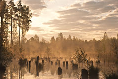 топь утра стоковое фото rf