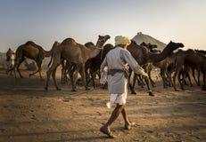 торговец верблюда в pushkar верблюде справедливом Стоковое Фото