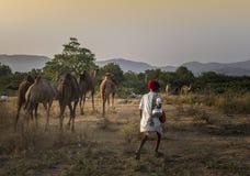 торговец верблюда в pushkar верблюде справедливом Стоковые Изображения RF