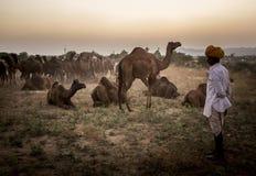 торговец верблюда в pushkar верблюде справедливом Стоковая Фотография RF