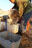 Торговец рыбной ловли Стоковая Фотография RF