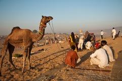 торговцы верблюда справедливые pushkar Стоковое фото RF