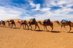 Торговый караван в пустыне Стоковая Фотография RF