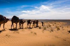 Торговый караван в пустыне Стоковое Фото