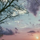 Торжественное дерево стоковая фотография