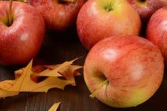 Торжественные яблоки Стоковое Изображение