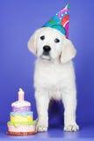 Прелестная поздравительая открытка ко дню рождения щенка золотистого retriever Стоковые Фотографии RF