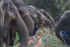 Торжество для слона в Пхукете Стоковая Фотография