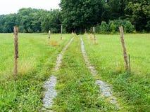 Торная дорога через лес towardds луга Стоковое Изображение RF