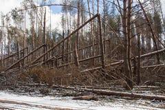 торнадо Стоковая Фотография RF