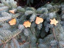 Торты меда золота рождества стоковые фотографии rf