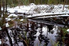 Торфяник, отражение в воде и деревья - зимнее время стоковые фотографии rf