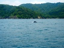 Торцовка кита стоковые изображения
