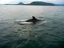 Торцовка кита стоковая фотография rf