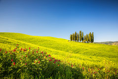 Тоскана на весне Стоковое Изображение RF