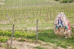 тосканские виноградники стоковые фото