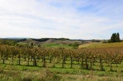 Тосканский виноградник найденный в итальянской сельской местности Стоковые Фото