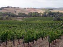 тосканский виноградник Стоковое фото RF