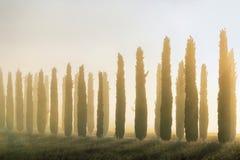 Тосканский ландшафт рано утром Стоковая Фотография RF