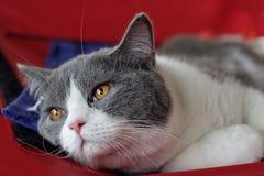 тоска кота Стоковое Изображение