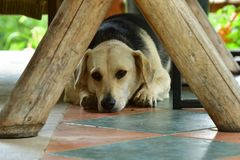Тоскливость собаки в портрете глаз Стоковая Фотография