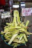 Точильщик сахарного тростника Стоковые Фото