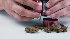 Точильщик с медицинскими бутонами марихуаны в мужской руке Конопля концепция фитотерапии акции видеоматериалы