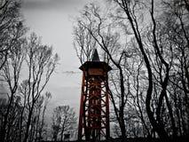 Точка зрения в древесине Стоковая Фотография RF