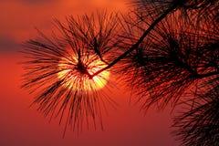 Точка зрения для захода солнца Стоковое фото RF