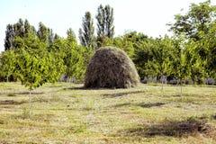 Точка зрения на ландшафте держателя Bobija, холмов, стогов сена, лугов и красочных деревьев Конец-вверх одиночного большого стога стоковое фото