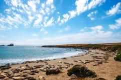 Точка зрения уплотнений слона - большая береговая линия Sur, Калифорния Стоковое Изображение RF
