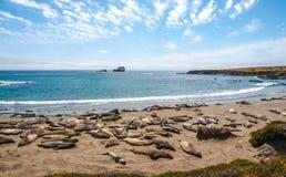 Точка зрения уплотнений слона - большая береговая линия Sur, Калифорния Стоковые Фотографии RF