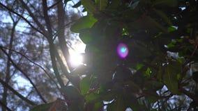 Точка зрения человека кладя на гамак на тропическом пляже сток-видео